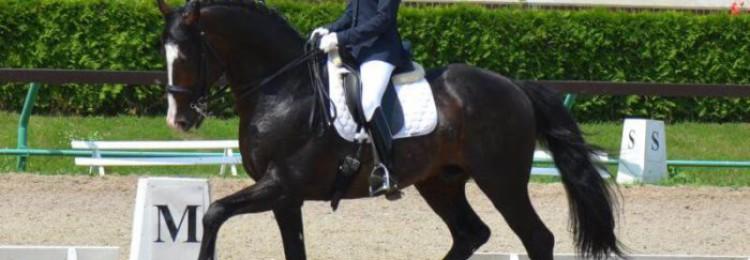 Каких мастей бывают лошади голштинской породы?