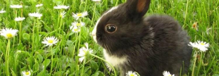 Уход за крольчатами в первые дни жизни, возможные проблемы при выращивании молодняка