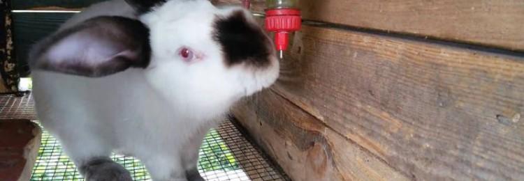 Как сделать поилки для кроликов из пластиковых бутылок своими руками