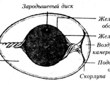 Яйцекладка, сбор и хранение яиц