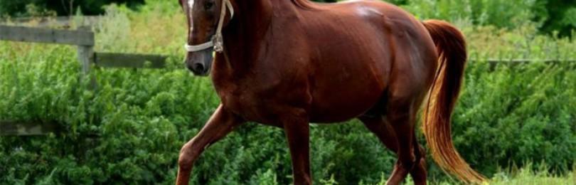 Обзор пород лошадей в Ленинградской области