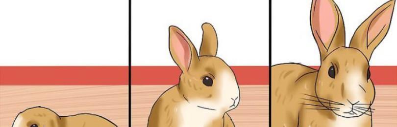 По каким критериям можно определить возраст кролика?