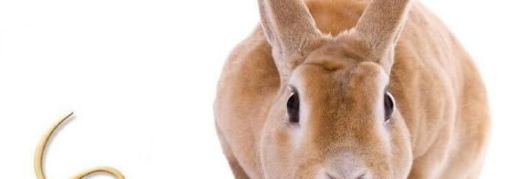 Как лечить глистов у кроликов?