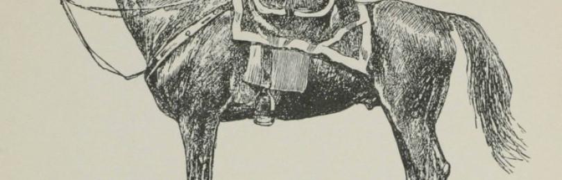 Ногайская порода лошадей
