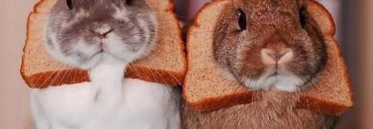 Можно ли кроликам давать хлеб?