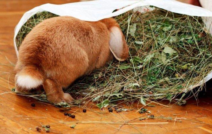 Кормление домашнего кролика