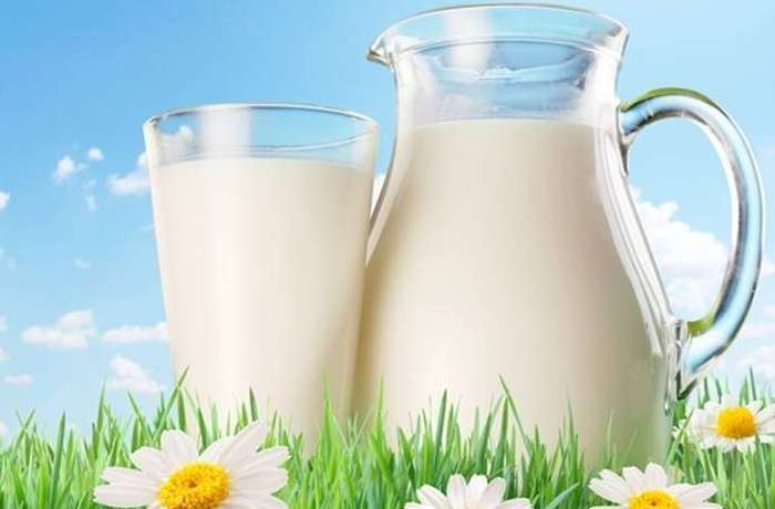 Корова этой породы дает до 3 500 литров молока