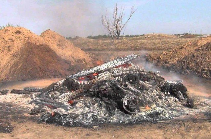Зараженные трупы животных сжигают