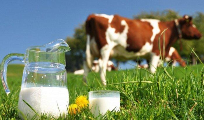 Раздой коров