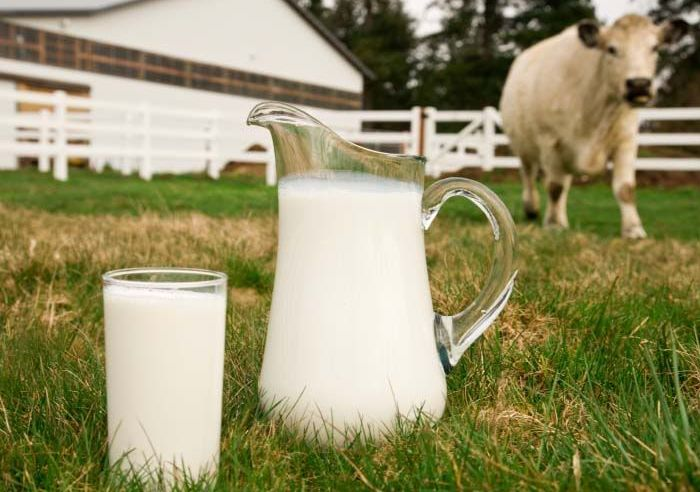 Со временем молочная продуктивность снизится