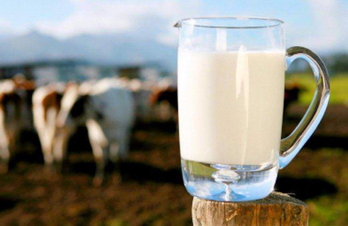 Годовые удои средневозрастных коров от 2400 до 2700 кг молока