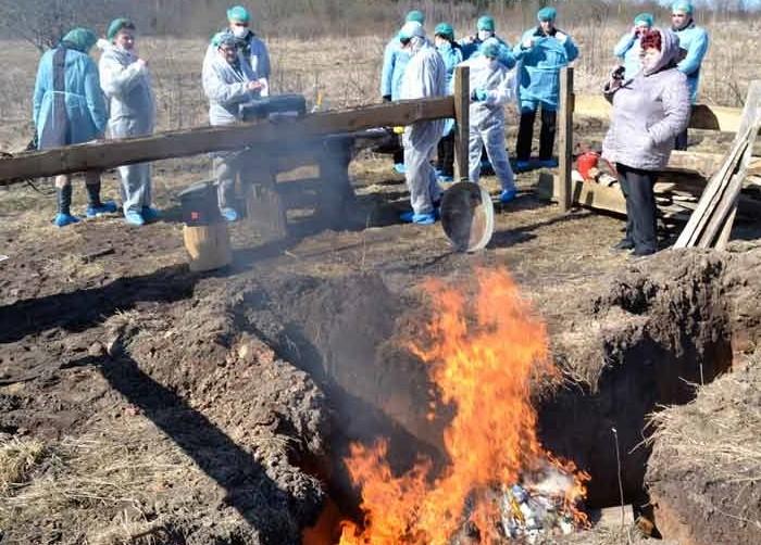Сжигание трупов крс после падежа