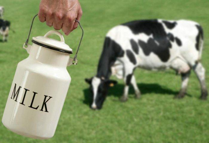 Снижение продуктивности коровы