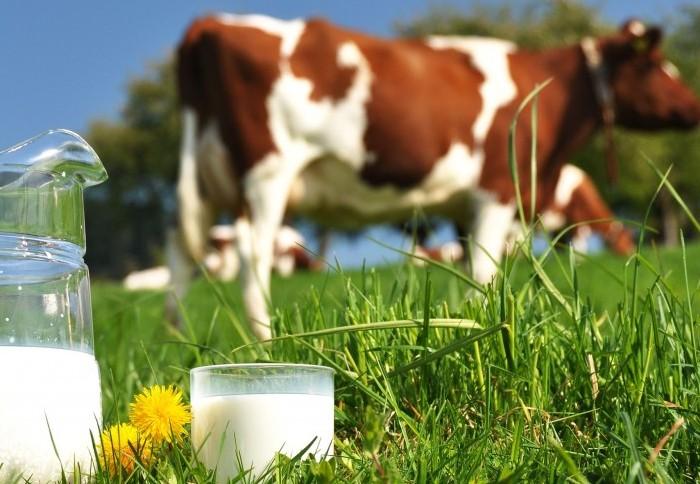 Молочная продуктивность быстро падает