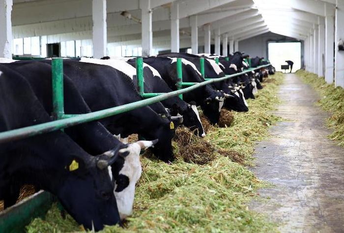 Уход за коровами в зимний период