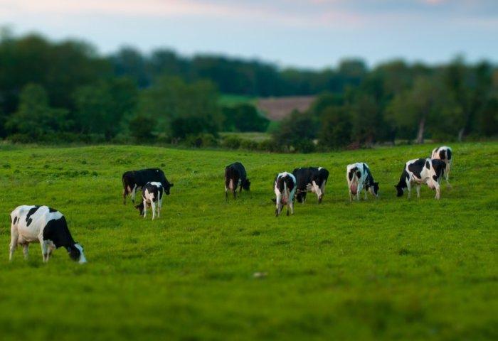 Перевод скота на пастбищное содержание
