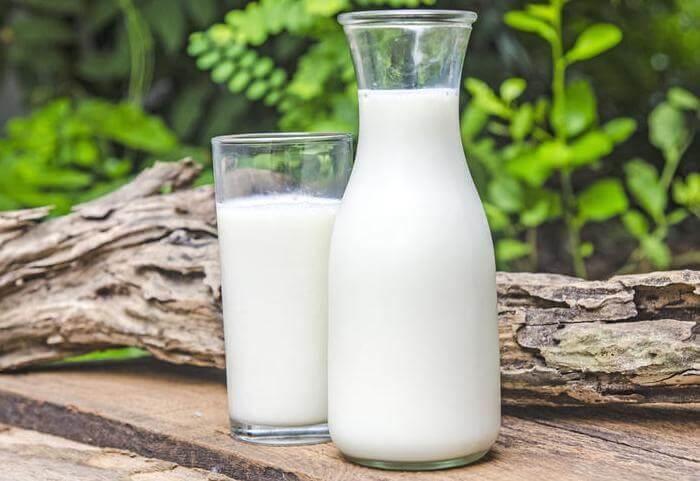 Молоко у породы жирное, период лактации длится 1 год