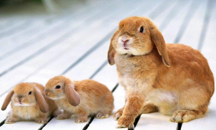 Крольчиха с потомством