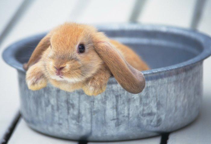 Купание кролика