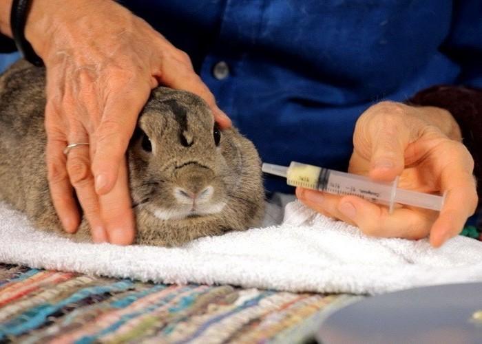 Лечение больного кролика