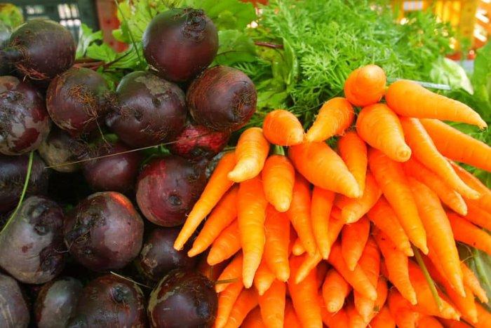 В меню самки в изобилии вводят овощи и корнеплоды