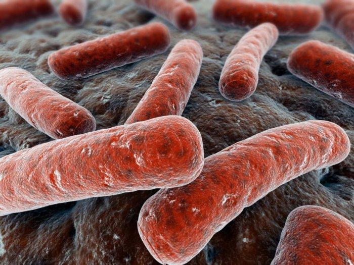 Возбудитель туберкулеза