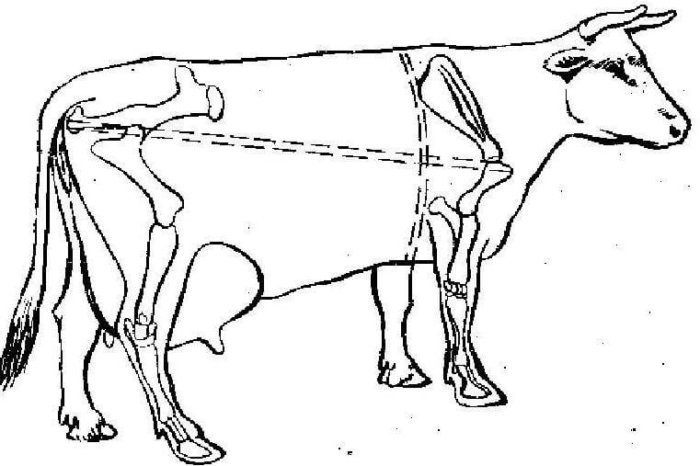 Метод измерения веса КРС