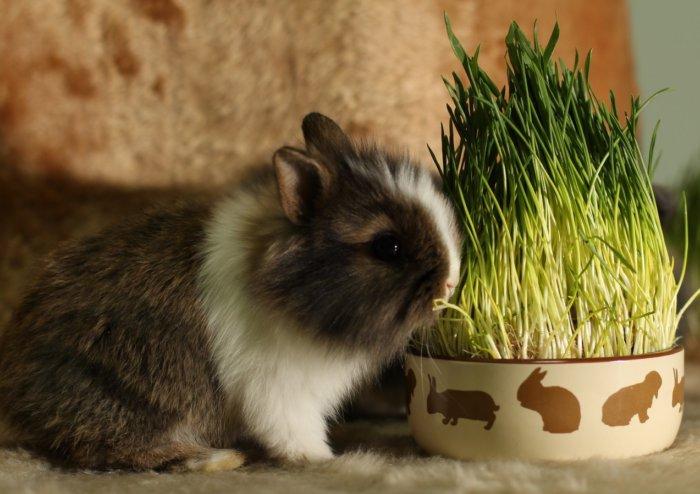 Зеленая трава для кроликов