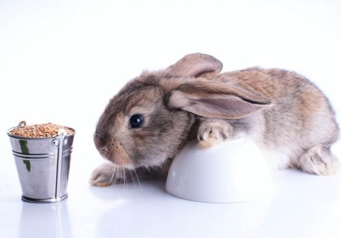 Пшеница для кролика