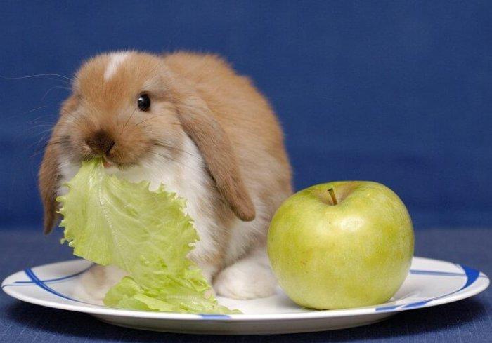 Яблоко для кролика