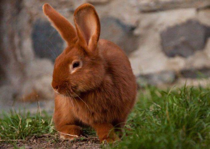 Кролик устал от игр