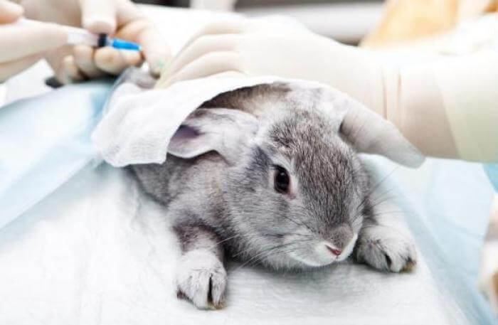 Лечебные меры при рините у кролика