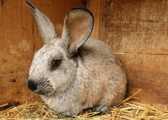 Кролик заболевает