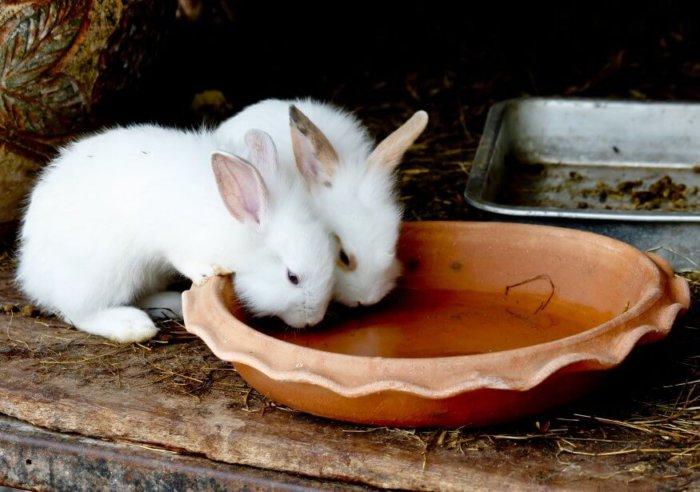 Крольчат пропаивают йодом после отсадки от матери