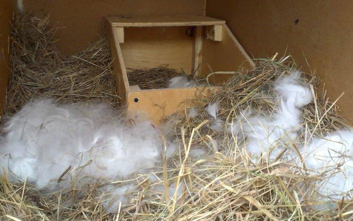 Пух и солома для оборудования кроликового гнезда