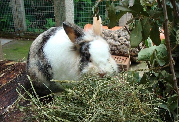 Кролик плохо ест