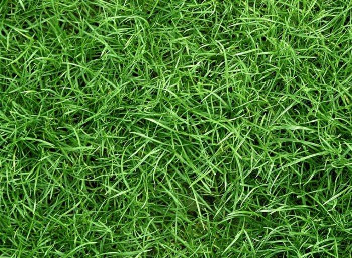 Для заготовки сена трава должна быть сочной и зеленой