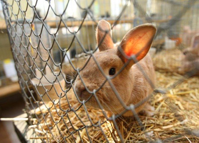 Клетки кроликов нуждаются в регулярной дезинфекции