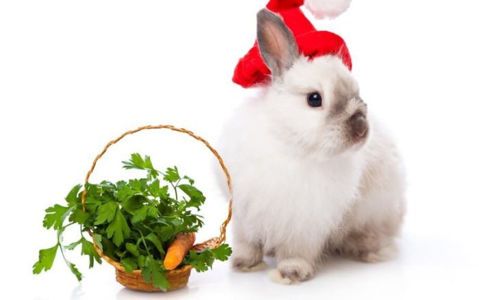 Кролик декоративной породы с морковкой