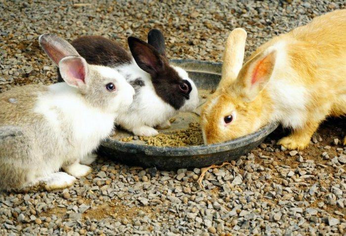 Отсадка крольчат от матери по достижении возраста 1,5 месяца