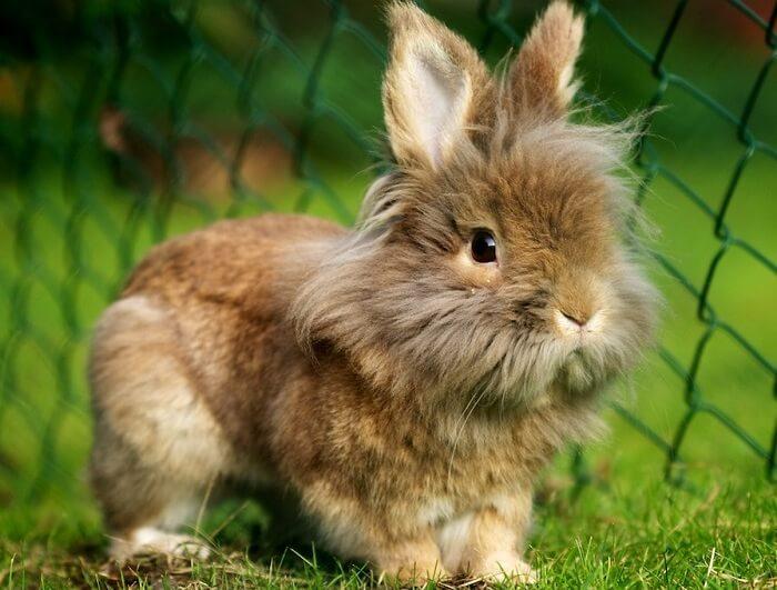 Внешний вид кролика