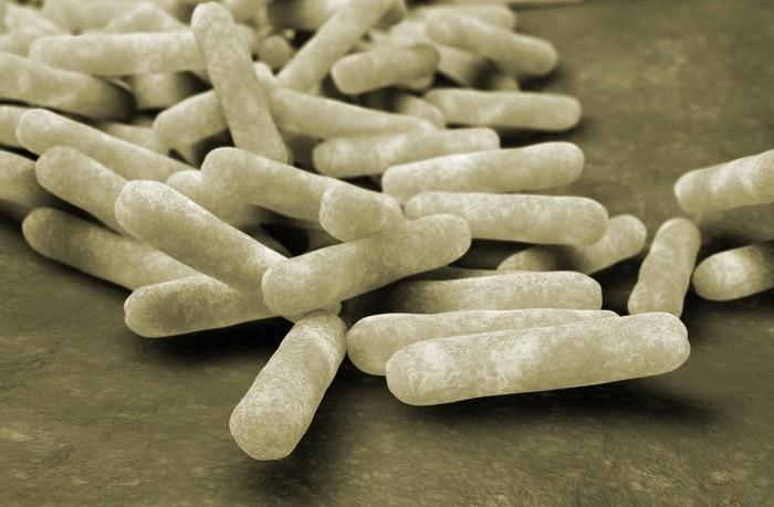 Паратиф телят вызывают бактерии группы сальмонелл