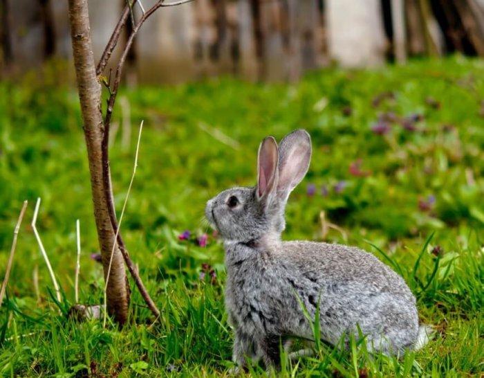 Твердые ветки для кролика