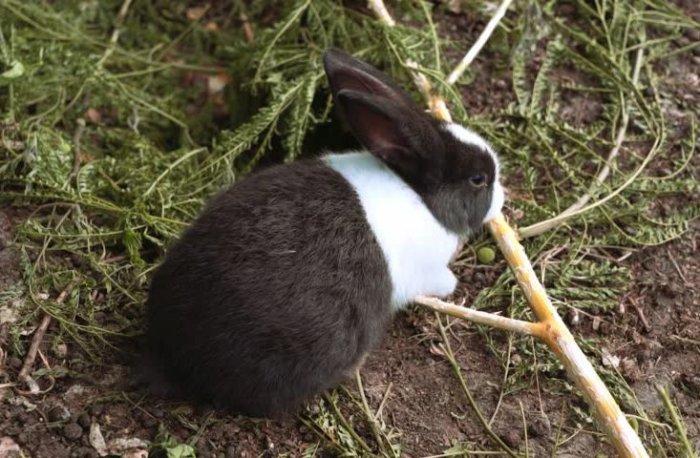 Кролик точит зубы о дерево