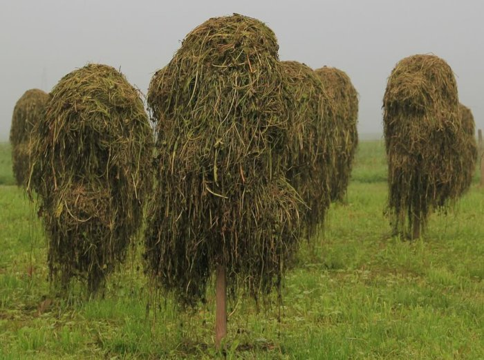 Заготовка сена для кроликов Хиколь