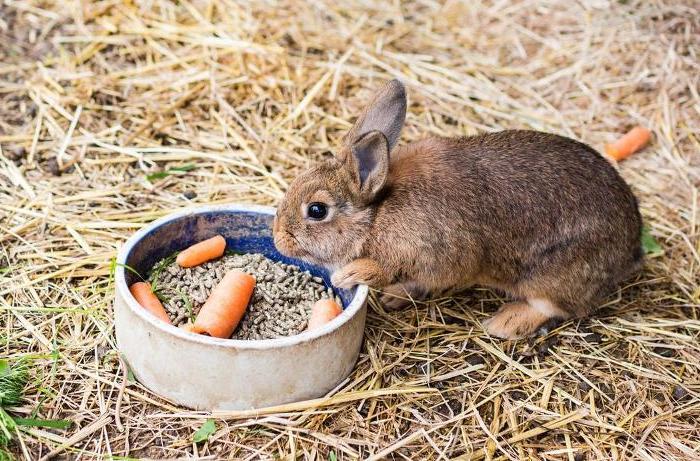 Проблемы с пищеварением кролика