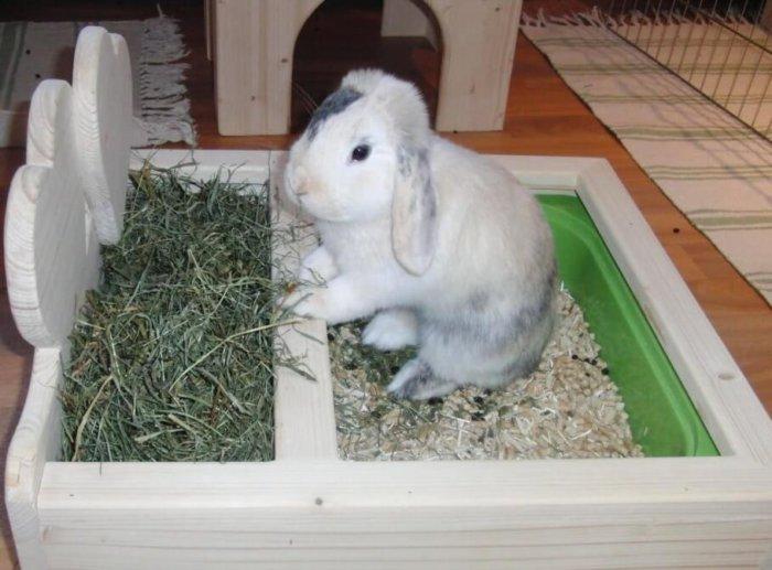Кролик на лотке