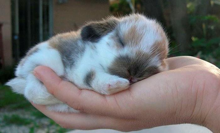 Кролик готов к дрессировке, если не боится рук