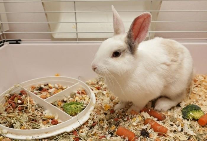 Полезные минералы и витамины для кролика