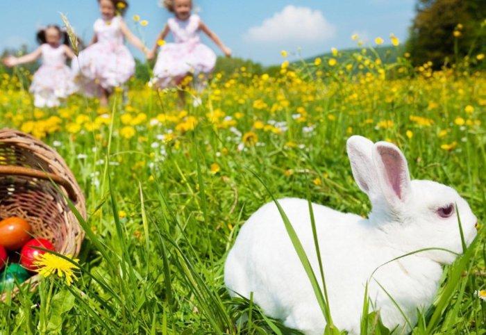 Кролик в одуванчиках